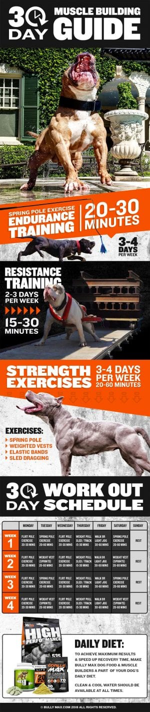 Muscle Building Workout Guide for Dogs